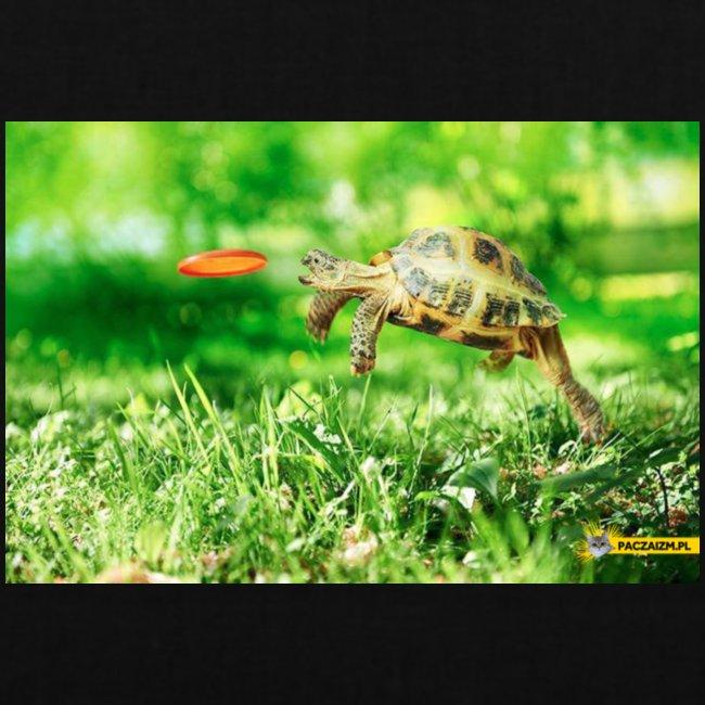 Żołw aportujący frisbee