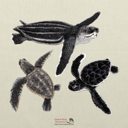 Sea Turtle Hatchlings - Tote Bag