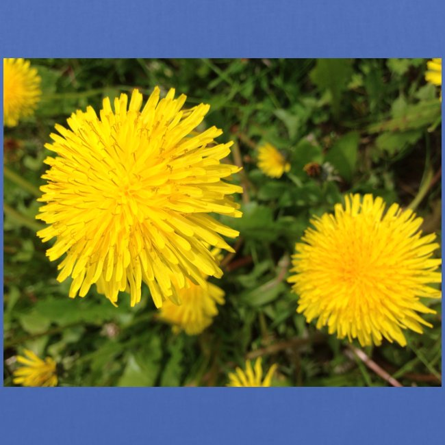 Butterblume