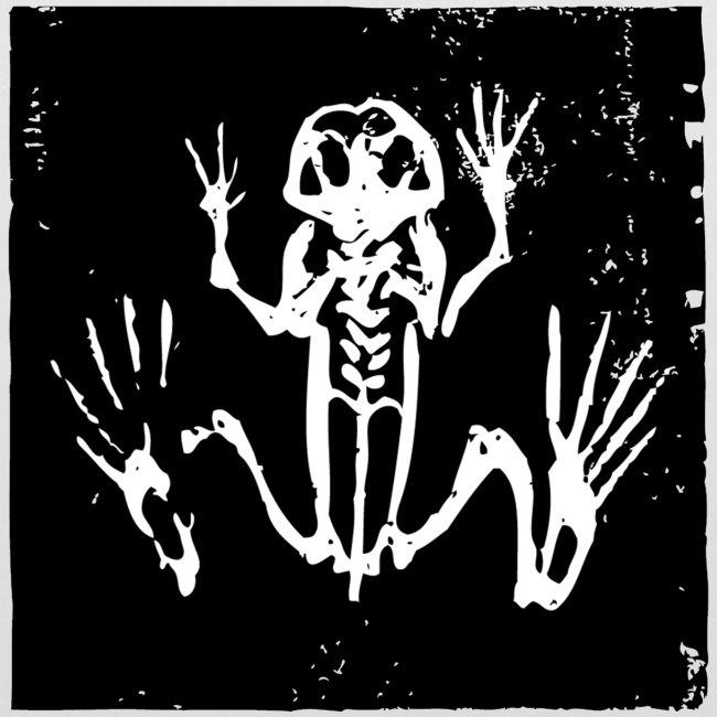 Museum Frog Skeleton