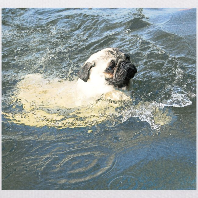 Mops schwimmt