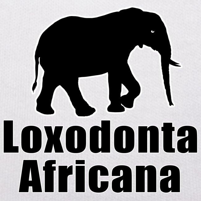 Loxodonta Africana - ELEFANT