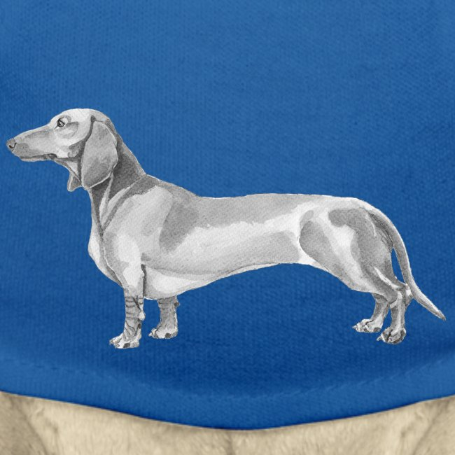 Dachshund smooth haired