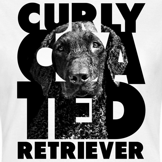 Curly Coated Retriever II