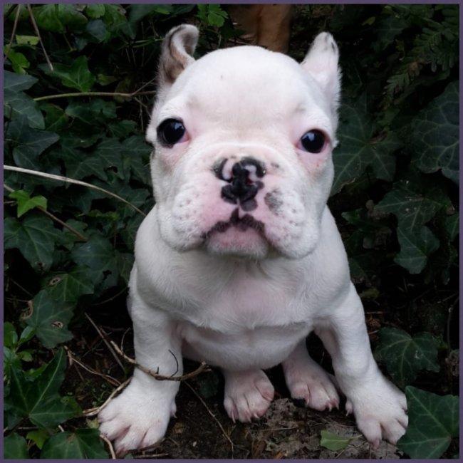 Billy Puppy 2