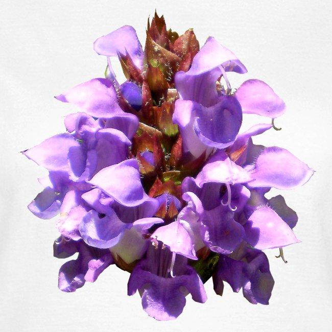 Nessel lila Sommer Blume