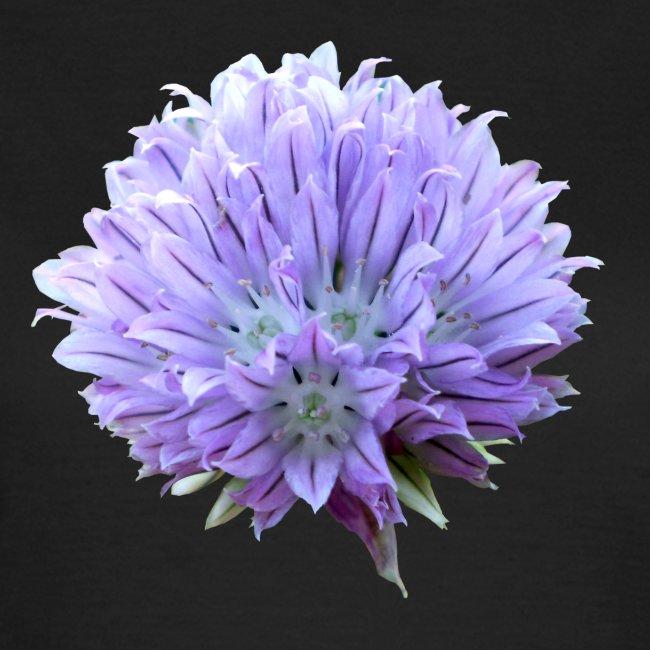 Schnittlauch Blüte Gewürz
