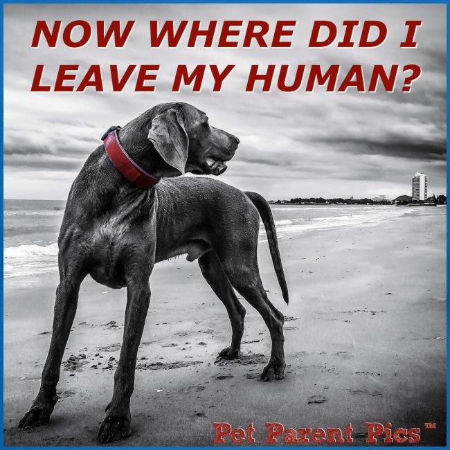 Where's My Human