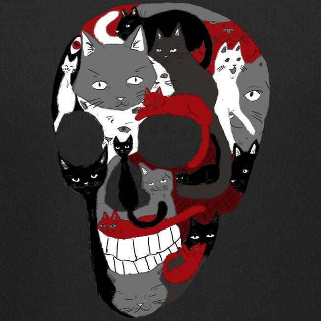 Crâne of the cat