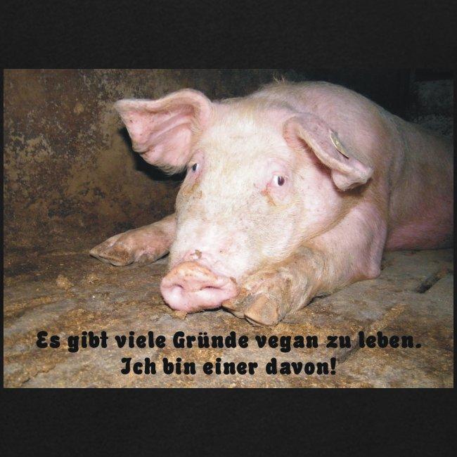 Gründe vegan zu leben