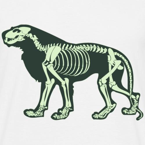 Squelette de lion