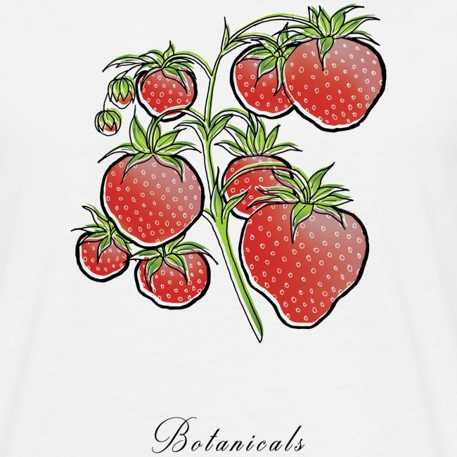 Disegno pianta di fragole