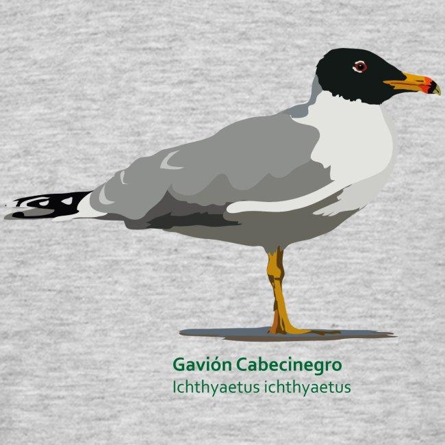 Gavion-Cabecinegro