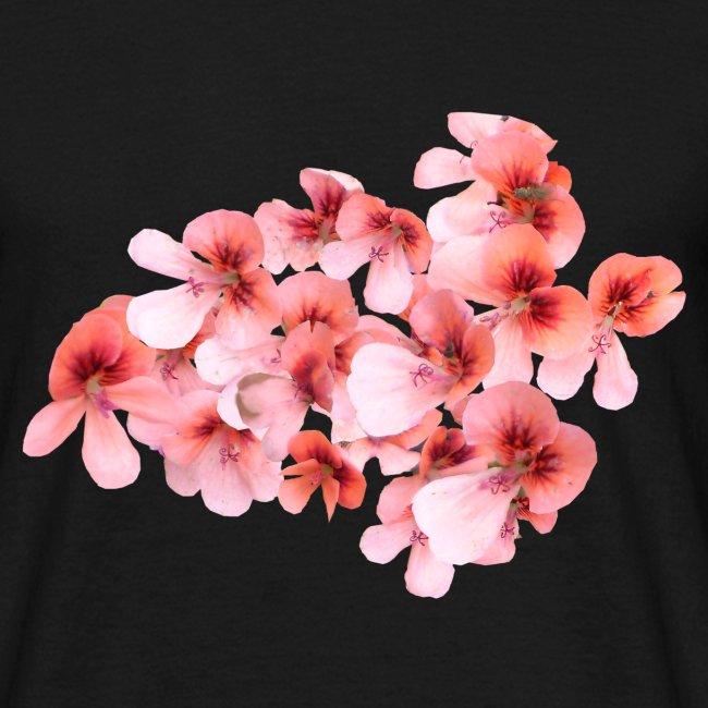 Hornveilchen rosa