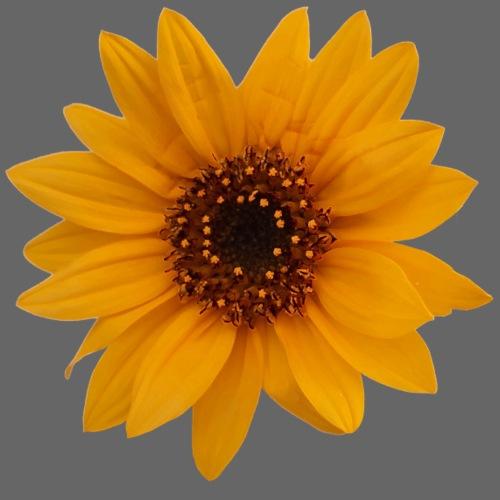 girasole baby fiori sunflower sun sun - Maglietta da uomo