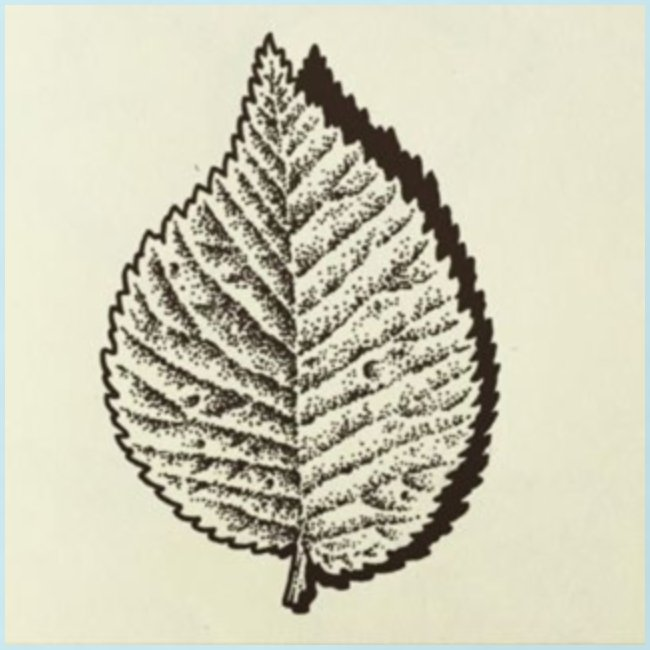 tree_01-pen