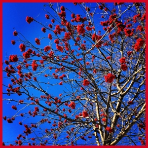 Red Flowers and Blue Sky - Maglietta per bambini