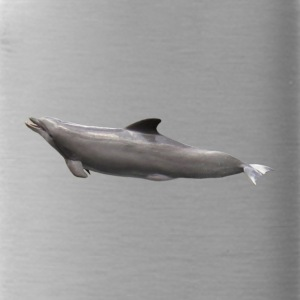 Dolphin - Water Bottle