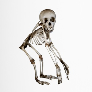 Baby Chimpanse Skeleton af Wild World Designs (WWD) - Termokrus