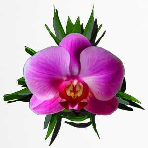 Orchidee leuchtend - Thermobecher