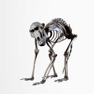 A Baboon Skeleton by Wild World Designs (WWD) - Travel Mug