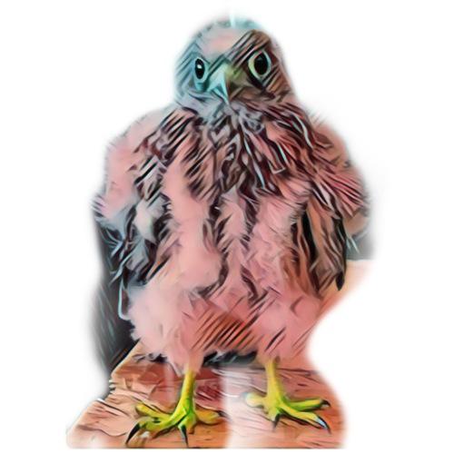 Pink bird growing 2 - Männer Premium T-Shirt