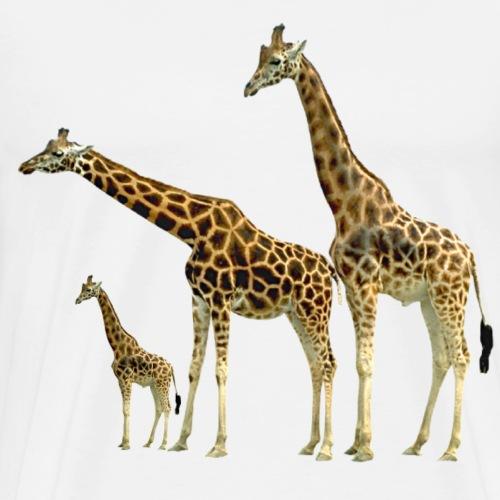 Giraffe Family wild Animals of Africa