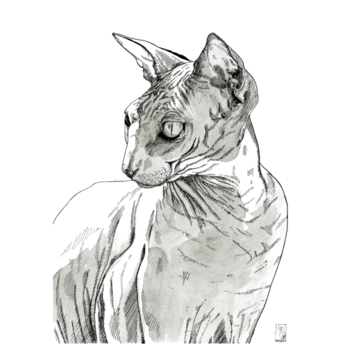 Sphynx Katze - Männer Premium T-Shirt