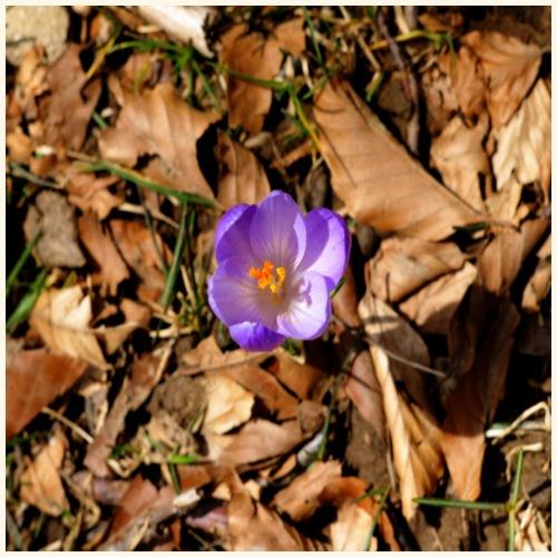 Fiore viola - Maglietta Premium da uomo