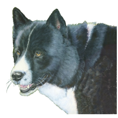 karelian beardog - Herre premium T-shirt