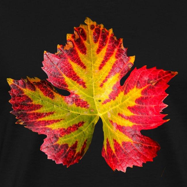 Weinblatt Herbst Wein Blatt Laub