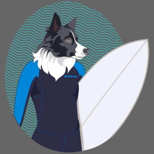 Border Collie - surfeur