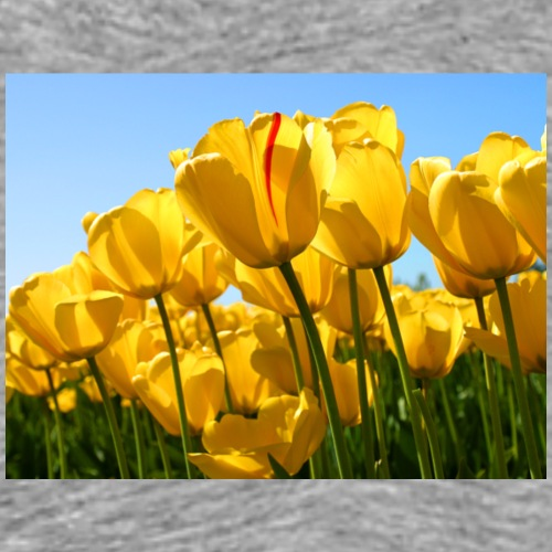 Tulips - Herre premium T-shirt