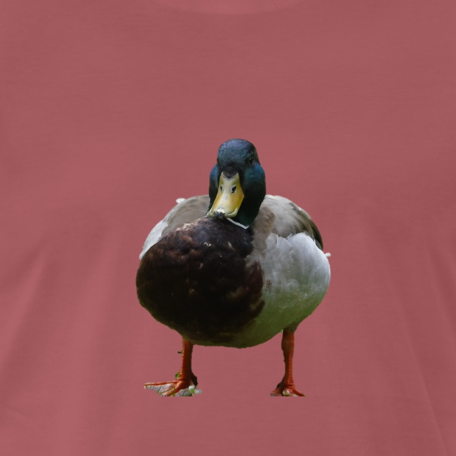 A lone duck