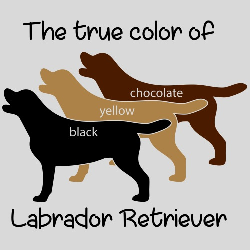 True Color Labrador - Männer Premium T-Shirt
