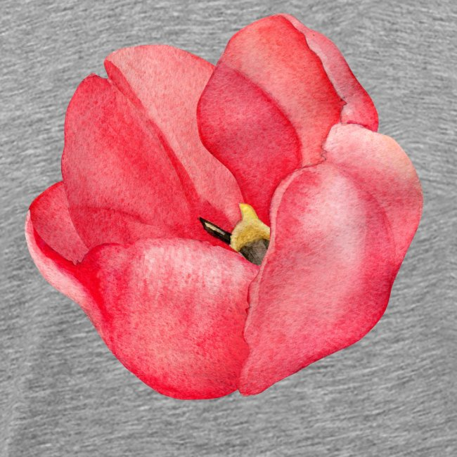 Red Tulip watercolor