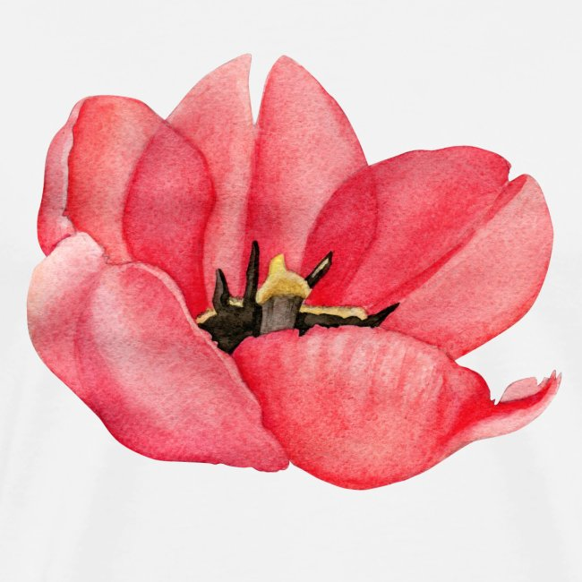 Red Tulip Flower Watercolor