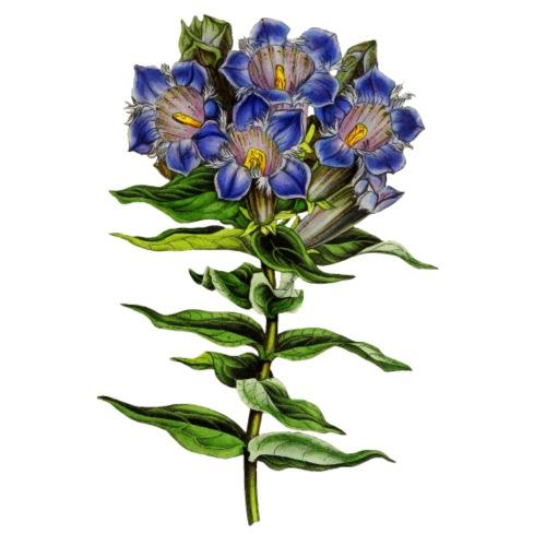Blue Nostalgic Flowers - Männer Premium T-Shirt