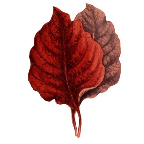 Rote Blaetter