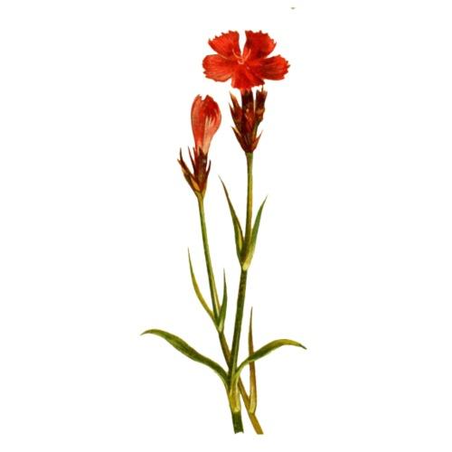 Rote Blume - Männer Premium T-Shirt