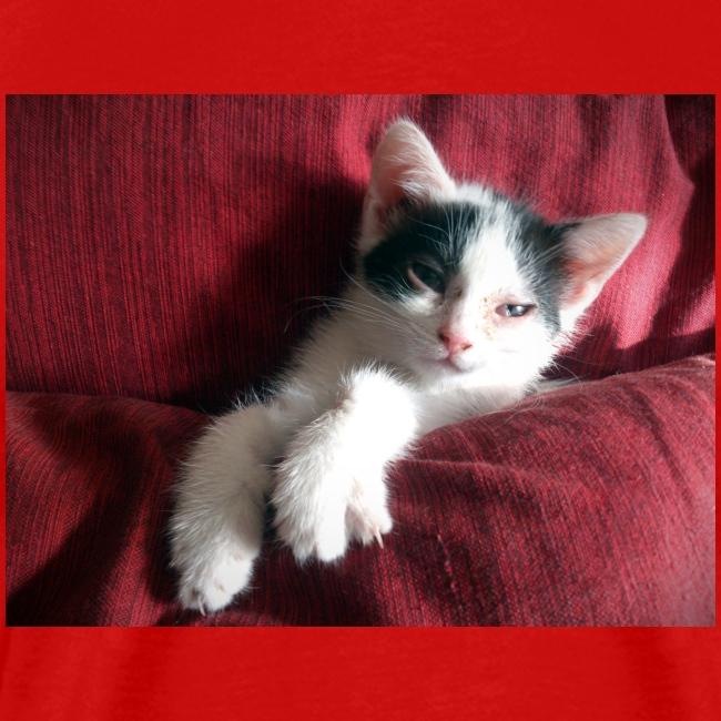 Katze in rot