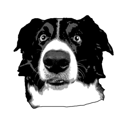 Border Collie Face - Männer Premium T-Shirt