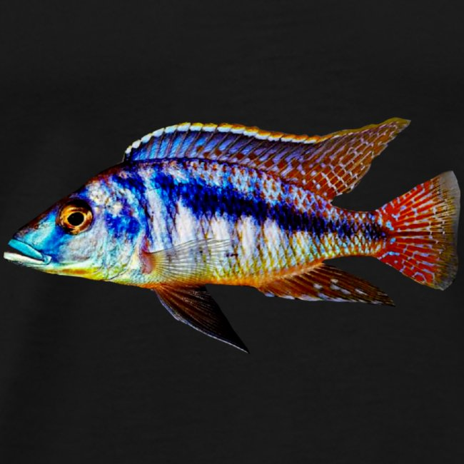 MIXED AFRICAN CICHLIDS