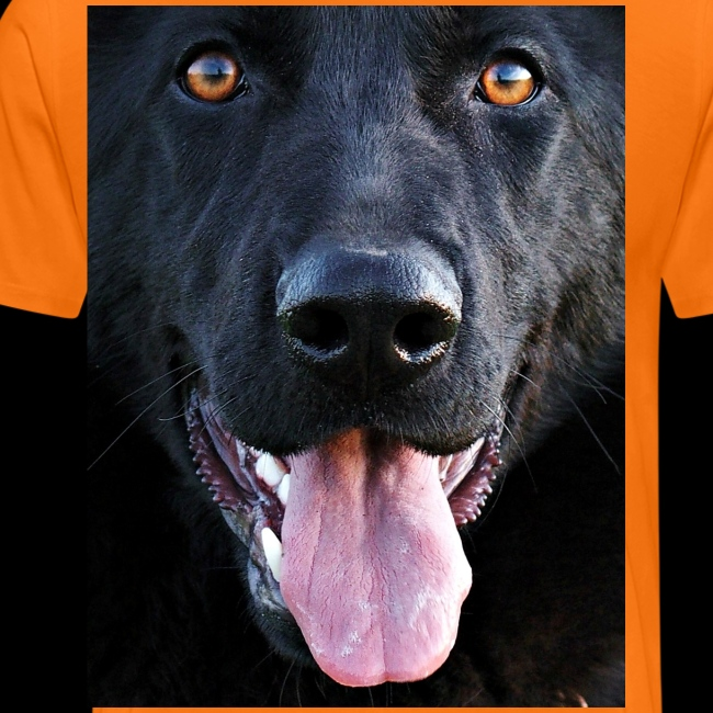 black-german-shepherd-lar