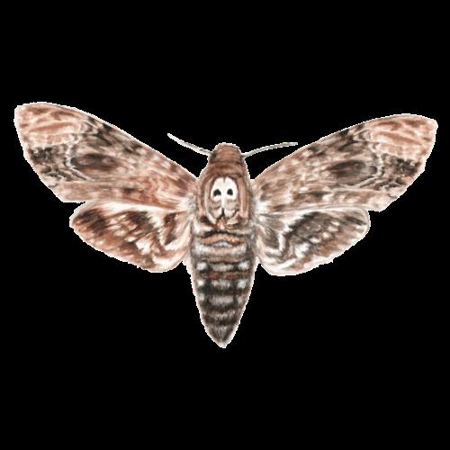 Nachtschwärmer - Totenkopf Motte - Männer Premium T-Shirt