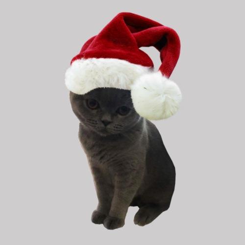 Grey Fur Christmas - T-shirt Premium Homme