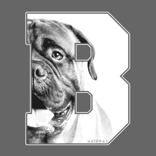 Bullmastiff Big B White - Miesten premium t-paita