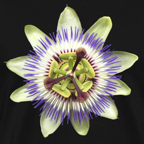Passionsblume Blüte Pflanze Natur - Männer Premium T-Shirt