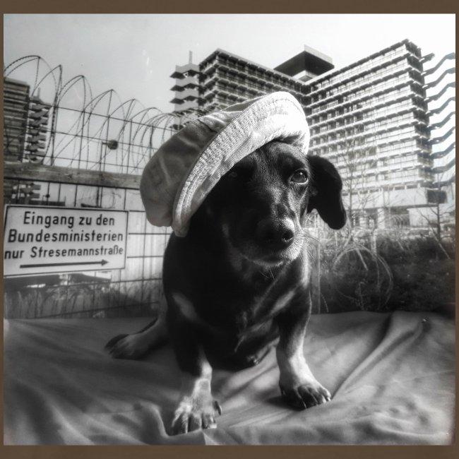 Minister Dog