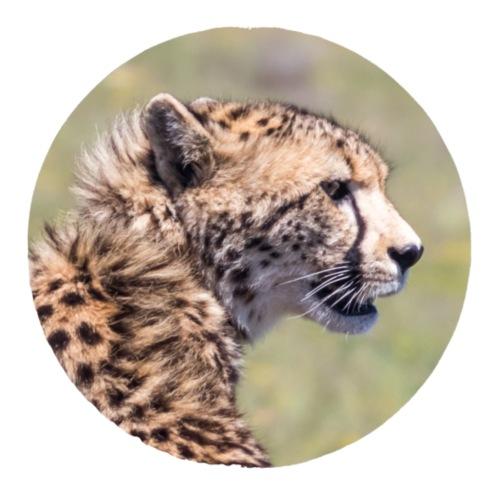 Geschenkidee Foto Gepard Südafrika
